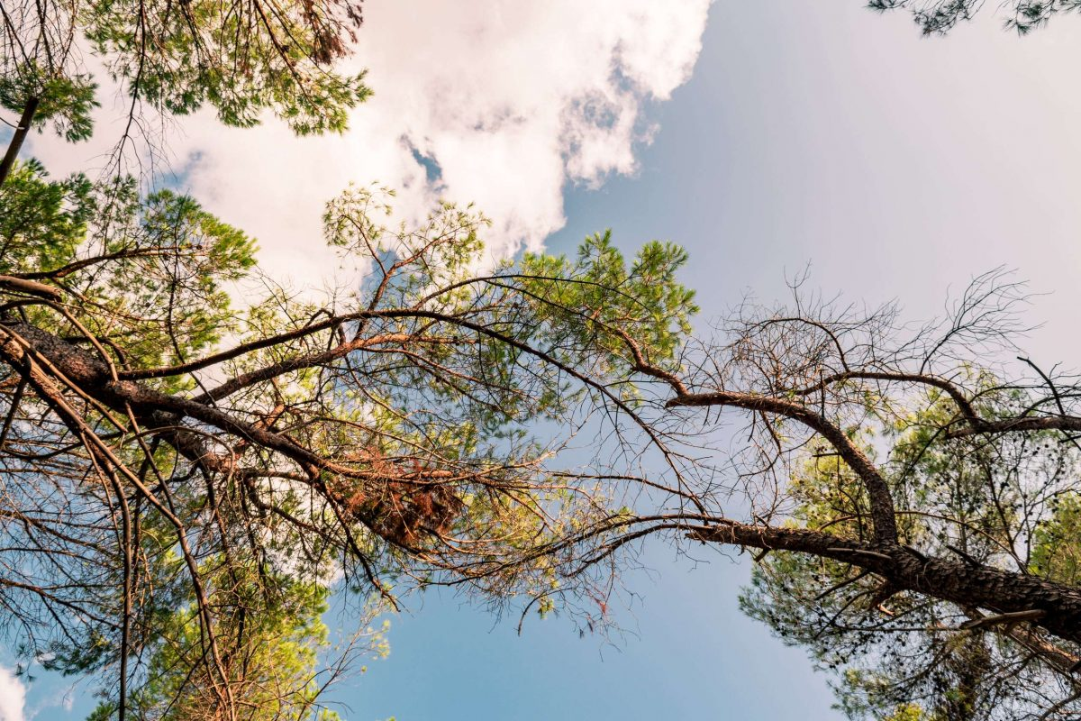 The sky at Mercadante Forest in the area of National Park of Alta Murgia in Puglia