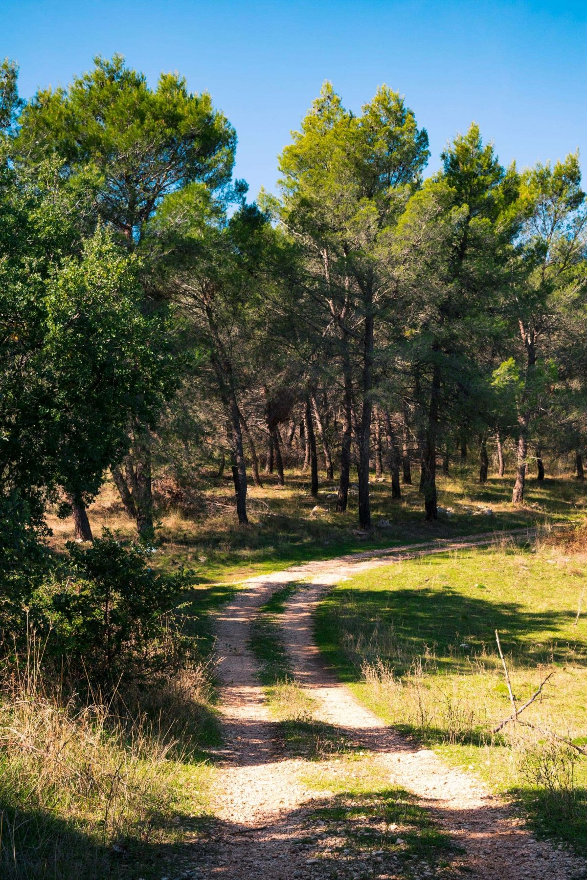 Mentecucco Wood in the area of National Park of Alta Murgia in Puglia